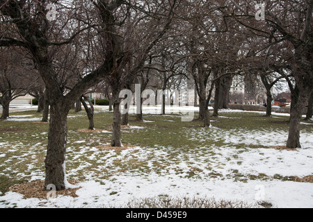 Detroit, Michigan - Los árboles en invierno en los terrenos de la biblioteca pública de Detroit.
