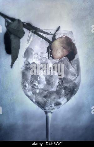 Una rosa marchito en un vaso lleno de cubitos de hielo.