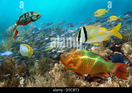 Buceo en un arrecife de coral con cardumen de peces de colores