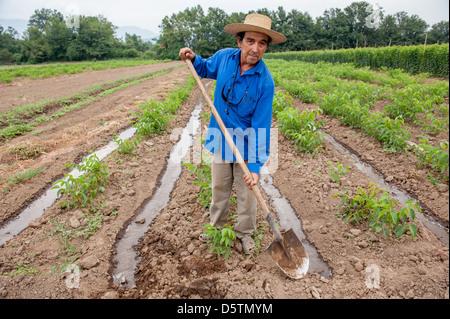Trabajador de granja tendiendo el riego por inundaci n en for Viveros frutales chile