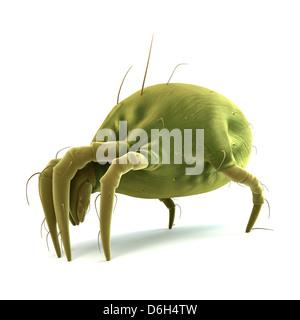 Los ácaros del polvo, las ilustraciones Foto de stock