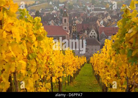 Vista de Riquewhir y viñedos en otoño, Riquewihr, Alsacia, Francia, Europa