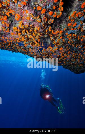 Buceo en el Blue Hole, Gozo, el Mar Mediterráneo, Malta