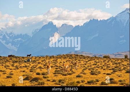 Parque Nacional Torres del Paine, Chile Foto de stock