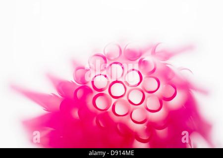 Foto de estudio de rosa pajas
