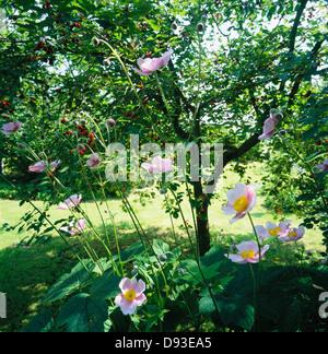 En el jardín de flores