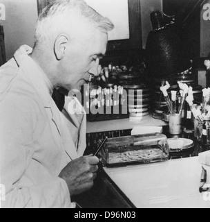 Alexander Fleming (1881-1955) bacteriólogo escocés. Descubrió la penicilina en 1928. Fotografía Foto de stock