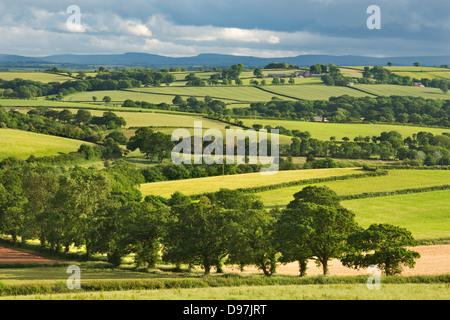 Tierras de labranza en tiempo de verano, Morchard Bishop, Devon, Inglaterra. Verano (Junio) de 2012. Foto de stock