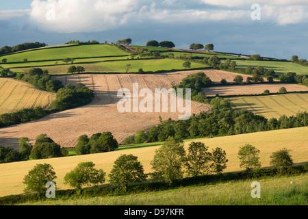 La campiña en verano, Nr Crediton, Devon, Inglaterra. Verano (julio de 2012). Foto de stock