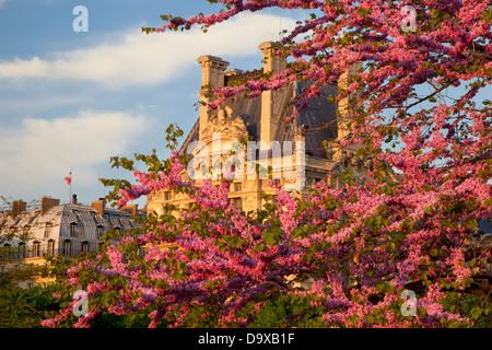 Los árboles floreciendo en el Jardin des Tuileries con el Musee du Louvre más allá, París Francia