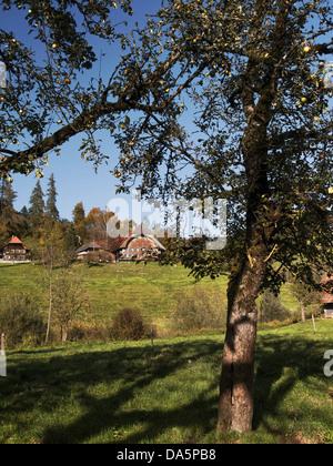 Apple tree, granja, granja, árbol, Emmental, casa, casa, corte, patio, Hofstett, cantón de Berna, Berna, árboles frutales, Suiza, EUR