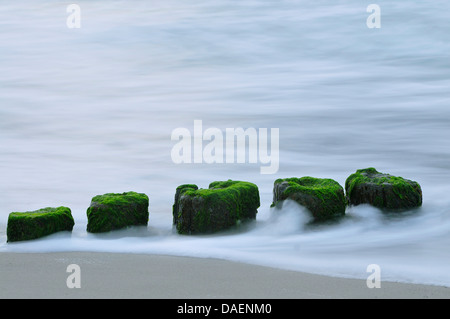 Las aguas del Mar Báltico que fluye alrededor del espigón polacos cubiertos de algas, Alemania, en el Estado federado de Mecklemburgo-Pomerania