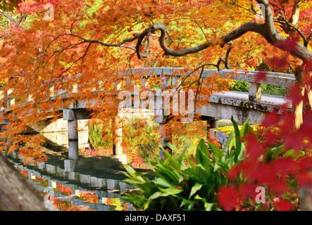 El follaje de otoño en templo Eikando en Kyoto, Japón.