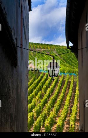 Linterna vieja colgando entre edificios en el pueblo medieval de Riquewihr con viñedos detrás Alsace Francia