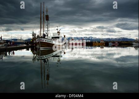 Avistamiento de ballenas en barco en el puerto de Húsavík, Norðurland eystra, Nordurland, el nordeste de Islandia, Islandia, Europa