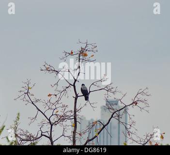 Crow en una sucursal