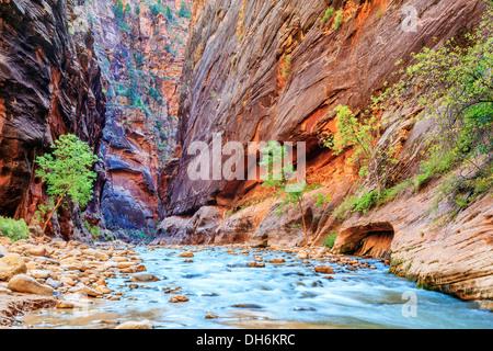 Rapids superficial del famoso Virgin River limita con el Parque Nacional de Zion - Utah Foto de stock