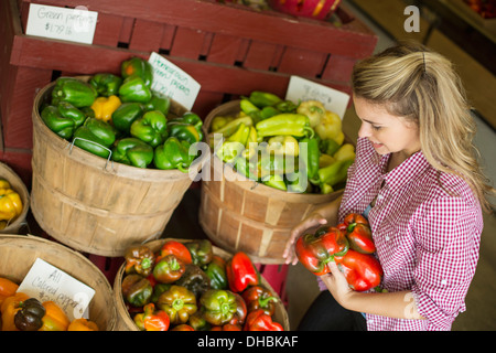 Trabajando en una granja orgánica. Una joven mujer de pelo rubio clasificar distintos tipos de pimiento por la venta.