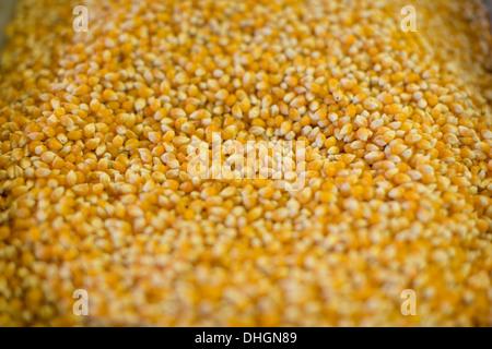 Reventar el maíz en un gran recipiente de metal en un lado carretera tienda en Texas.