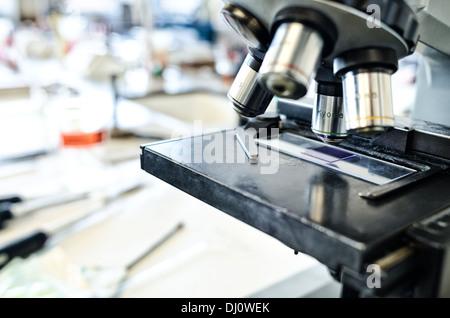 El violeta de metilo células teñidas tinción de gram para la investigación en microbiología bacterias células bajo microscopio en laboratorio