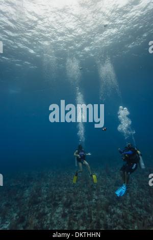 Dos buzos explorar el arrecife de coral en la Reserva Marina Hol Chan en el Caribe, Belice, Centroamérica