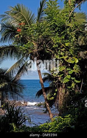 Bahía Onomea desde un sendero frente al océano en el Hawai, un jardín botánico tropical de 37 acres de reserva natural cerca de Hilo, Hawaii. Foto de stock