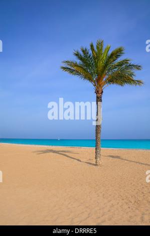 Mediterráneo palmera en la Playa del Paraíso Villajoyosa Alicante ESPAÑA