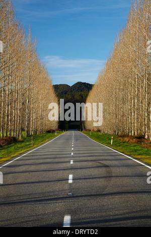 La carretera estatal 65 cerca de Maruia, Región Buller, Costa oeste, Isla del Sur, Nueva Zelanda
