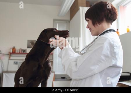Examen veterinario hembra ojos perros en la clínica