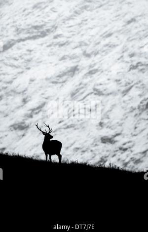 Ciervo el ciervo colorado (Cervus elaphus) siluetas contra una montaña nevada convierte a blanco y negro. Glen Etive, Glencoe, Highlands Foto de stock
