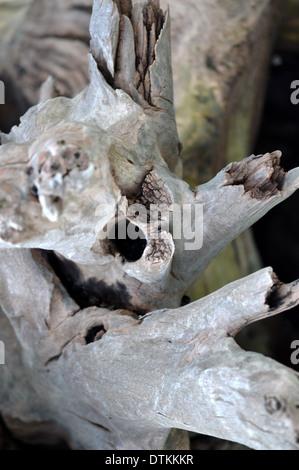 Enormes troncos arrastrados hasta la playa de registro