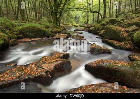 Río Fowey ruedan a través de rocas en Golitha Falls, Cornwall, Inglaterra. Otoño (septiembre de 2013).