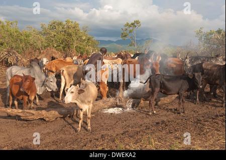 Surma herder