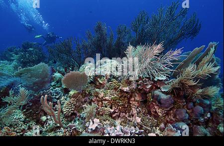 Buceo en el arrecife en Roatán, Honduras