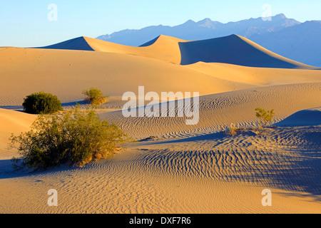 El Mesquite Flat Dunas de Arena, el Parque Nacional Valle de la Muerte, California, EE.UU. / La luz de la mañana