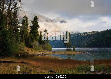 Los Pinos, las nubes bajas y las montañas, el otoño (otoño) a Phelps, Lago, parque nacional Grand Teton, Wyoming, EE.UU.
