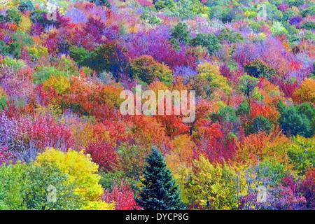 Las hojas de los árboles multicolores durante el otoño en Nueva Inglaterra, Estados Unidos, han sido alterada digitalmente Foto de stock