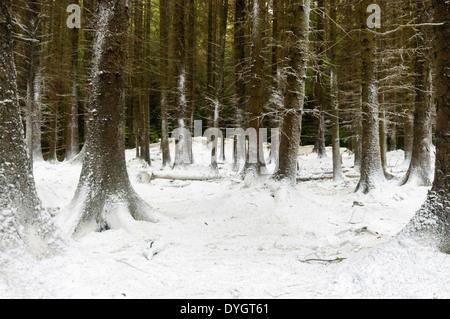 Tollymore, Irlanda del Norte, cubiertos con nieve falsa para el rodaje del primer episodio de Juego de Tronos