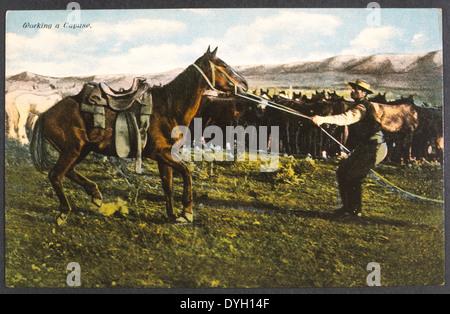 Cowboy rompiendo un caballo, un 'Trabajo', Fotografía Hand-Colored Cayuse, circa 1925 Foto de stock
