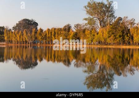 Hilera de árboles reflejando en el agua, en la zona de Pyin U Lwin, región de Mandalay, Myanmar (Birmania) Foto de stock