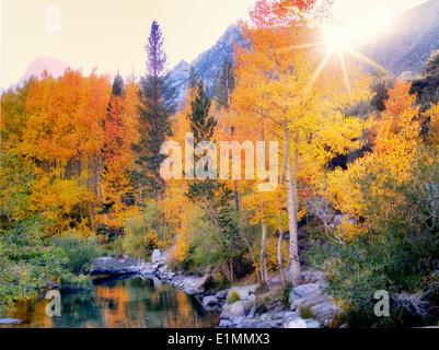 Color otoño álamos junto Obispo Creek, California. El condado de Inyo. La parte oriental de Sierra Nevada Mountins