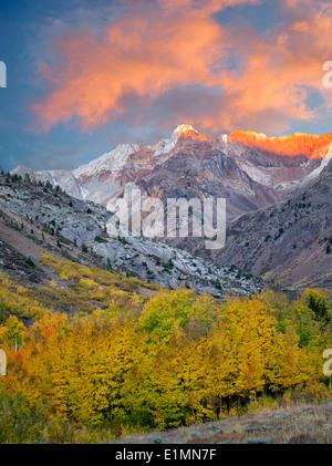 Mcgee Creek con drenaje de color otoño álamos y árboles de Aspen. La parte oriental de Sierra Nevada Mountains, California