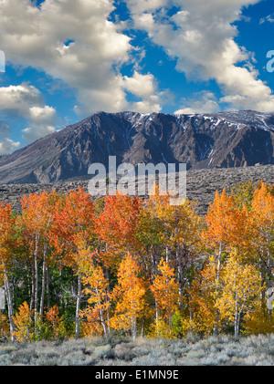 Bloody Cañón. árboles de Aspen en otoño de color. La parte oriental de Sierra Nevada Mountains, California