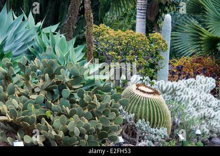 España, Islas Canarias, Gran Canaria, Las Palmas, Arucas, Marquesa de jardín jardín de cactus
