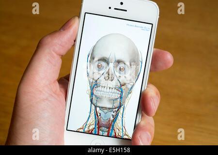 Utilizando medical app para el estudio de la anatomía humana de ...