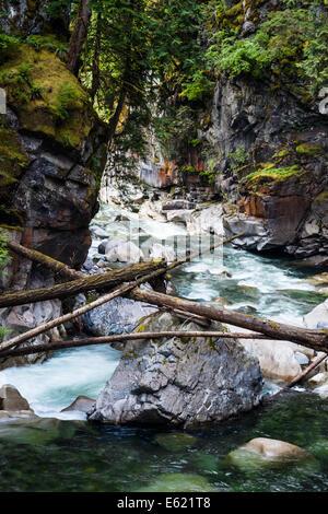 Árboles caídos a ambos lados del río por el coquihalla othello túneles ferroviarios cerca de esperanza, British Columbia Foto de stock