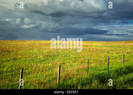 Nubes de tormenta de cerco, y flores silvestres. Prairie Zumwaly preservar, Oregón