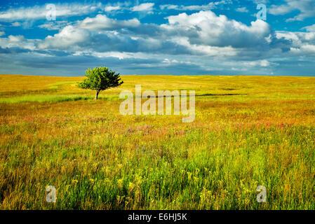 Lone Tree y flores silvestres. Zumwalt Prairie Preserve, Oregón
