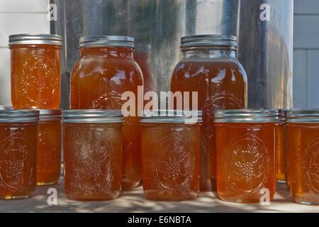 La Miel en tarros de pinta y 2 cuarto de galón.