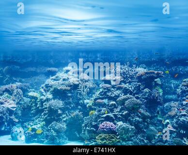 Mar o el océano subacuático con arrecifes de coral y peces tropicales